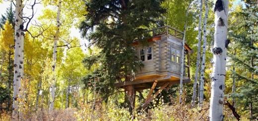 Colorado Treehouse smoke shack