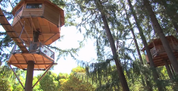 Inventor creates Ewok world in rural Oregon – DIY Treehouses