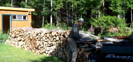 Preparing For Winter - Cutting wood and managing your forest